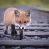 Konsta Punkka, el joven fotógrafo finés que susurra a los animales para lograr imágenes muy íntimas
