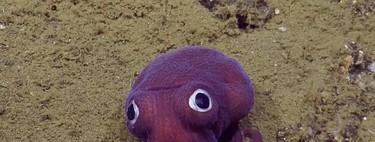 7 especies de pulpo que demuestran por qué son los animales más monos de los océanos