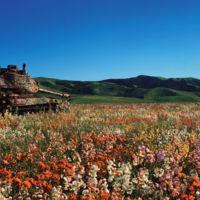 La paz en forma de tanques de guerra devorados por la naturaleza