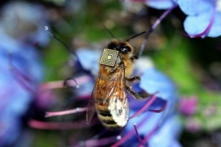 Un red de miles de abejas ayudará a estudiar las causas de su extinción