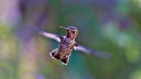 Hummingbird 691483 960 720