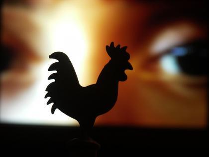 Gallinas, gallos, y empresas