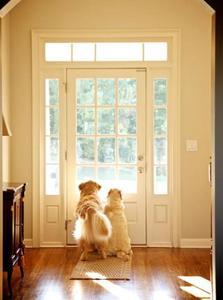 Mascotas y decoración: Siete consejos si hay perros y gatos en casa