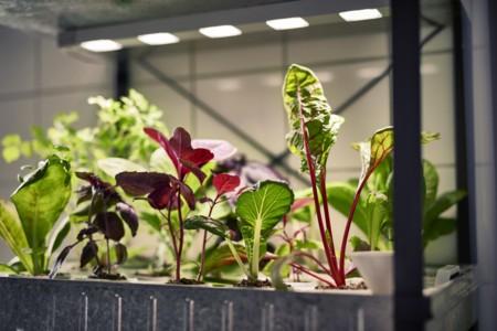 Ikea Coleccion Indoor Gardening 2016 Ph133368 Cultivo Hidroponico Acero Negro Galvanizado Lowres