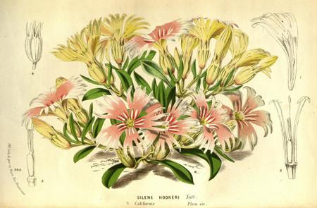 Ilustraciones Antiguas De Botanica Y Animales Gratis Biblioteca Patrimonio Diversidad Flores