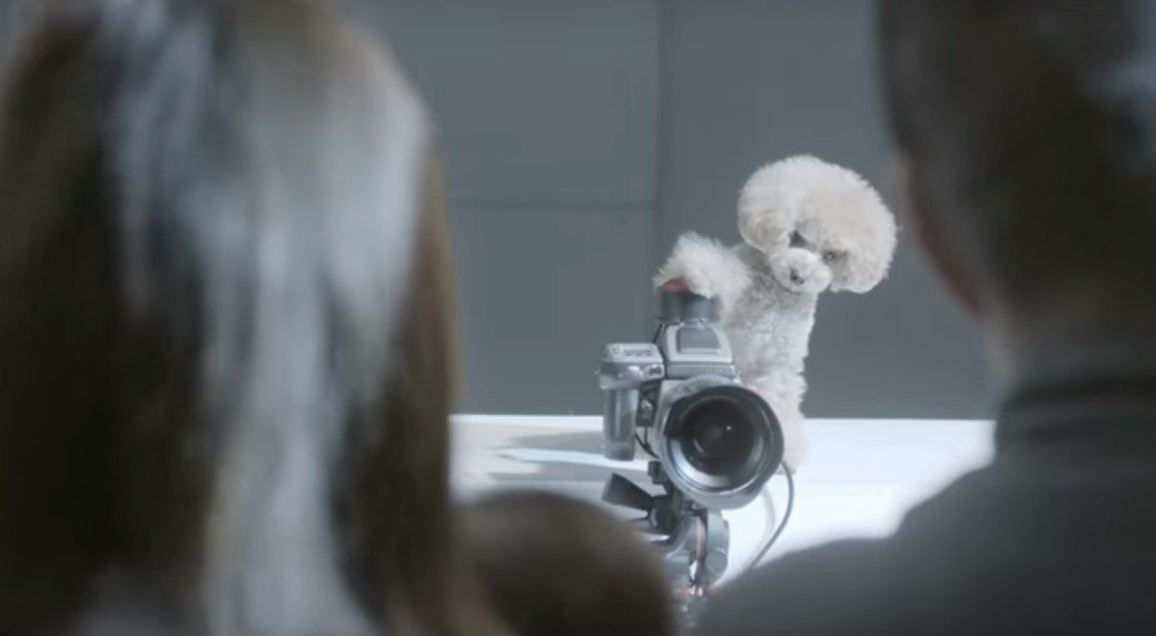 PhoDOGgrapher, ¿cómo saldrías en una fotografía hecha por tu perro?