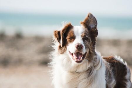 Los piensos para perros mejor valorados de Amazon también son los que mejor precio tienen: ahorra y cuídale a la vez