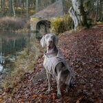 FAY consiente a las mascotas de la casa y lanza una colección de invierno especial para ellos