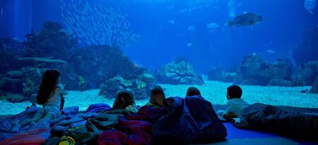 Oceanario Lisboa niños