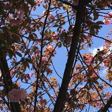 La primavera nos trae 5 ayudas fáciles para prevenir, preparar, reparar y estar perfectas en cuestión de minutos