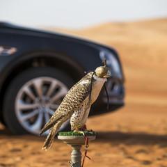 Foto 11 de 36 de la galería bentley-bentayga-falconry en Motorpasión