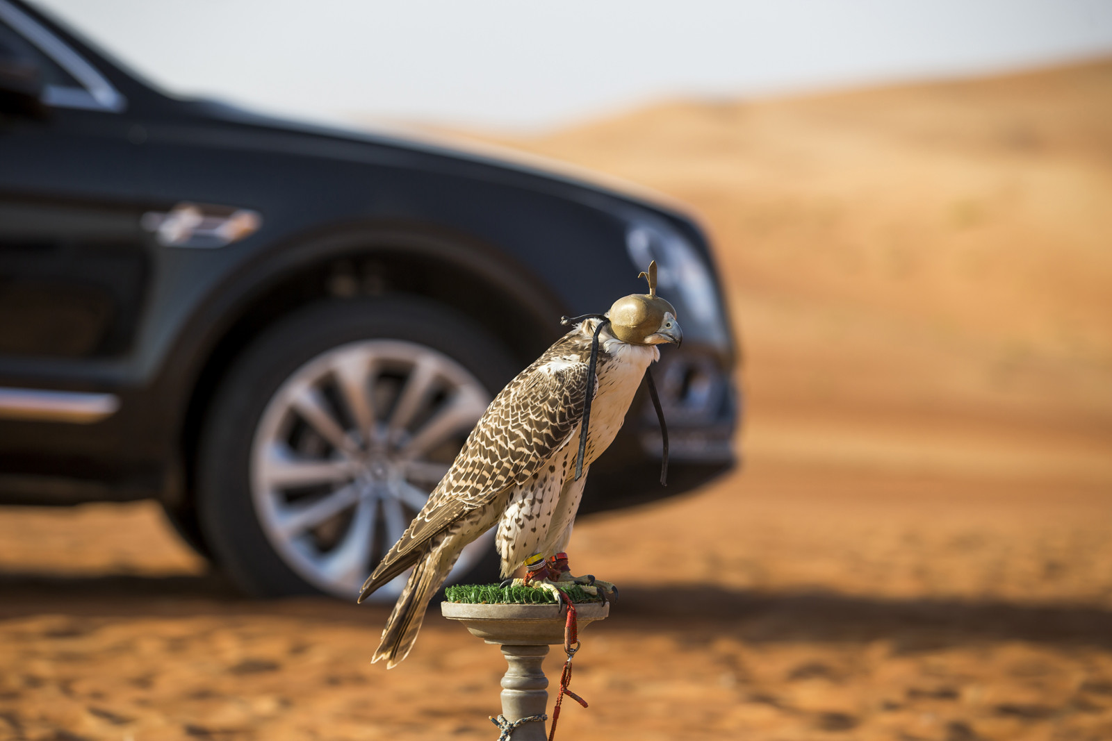 Foto de Bentley Bentayga Falconry (11/36)