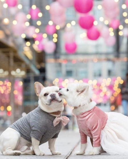 La última historia de amor que triunfa en Instagram está protagonizada por un bulldog francés y su pareja