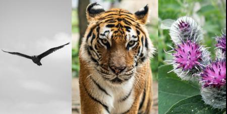 Pájaros aerodinámicos, herbívoros estereoscópicos, plantas autosuficientes: la naturaleza que inspira los avances tecnológicos