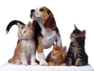 Mascotas en casa: los sitios prohibidos