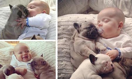 Bebe y bulldogs 2