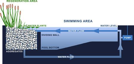 C mo conseguir una piscina ecol gica for Filtro natural para estanque