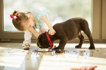 Nina Alimentando A Su Perro