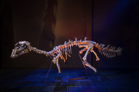Esqueleto Proa Dinópolis