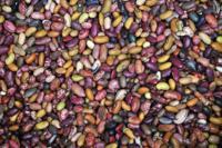 El frijol, parte sustancial de las comidas de México