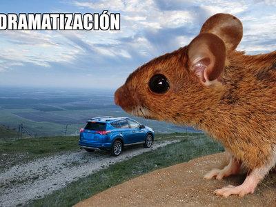 Cuando tu coche es el menú preferido de los roedores