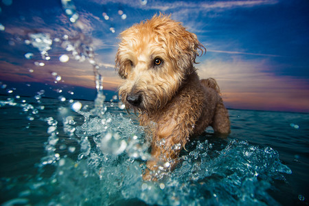 Estas son las tiernas imágenes ganadoras del concurso Dog Photographer of the Year 2017
