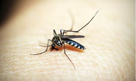 Las mejores lámparas antimosquitos según los comentaristas de Amazon