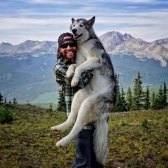 Foto 5 de 9 de la galería loki-the-wolfdog en Diario del Viajero