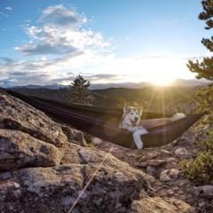 Foto 7 de 9 de la galería loki-the-wolfdog en Diario del Viajero