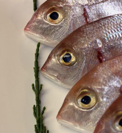Diferencias entre el pescado azul y el pescado blanco