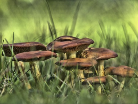 Wild Mushrooms 196695 1280
