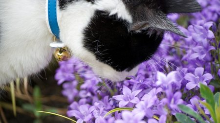 Estudios muestran que podríamos ser insensibles a ciertos olores