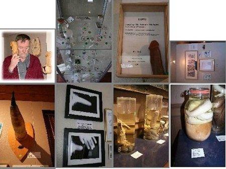 El Museo del pene islandés ya tiene un ejemplar humano