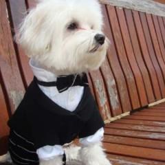 Foto 1 de 6 de la galería the-puppi-catwalk en Trendencias