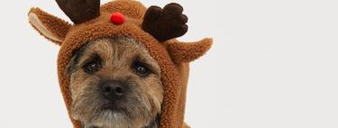 La estrella de esta Navidad va a ser tu perro y estos seis disfraces y jerséis de H&M tienen la culpa