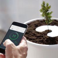 Esta urna funeraria es biodegradable y sirve a otro propósito: a plantar un árbol