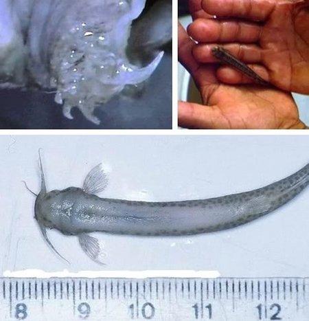 Cosas que no sabías sobre el pene (y IV)