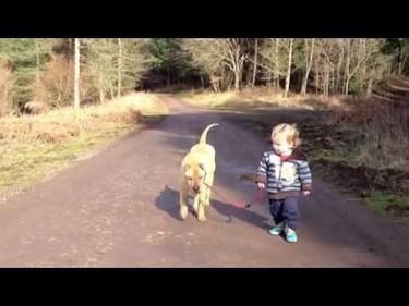El vídeo más tierno del momento: un niño, su perro y un charco
