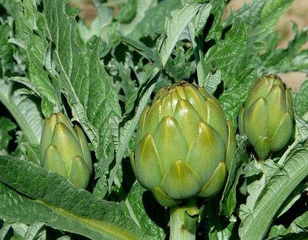 La dieta de la alcachofa: características y errores más comunes