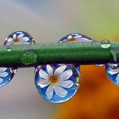 Foto 17 de 25 de la galería la-belleza-de-una-gota-de-agua en Xataka Foto
