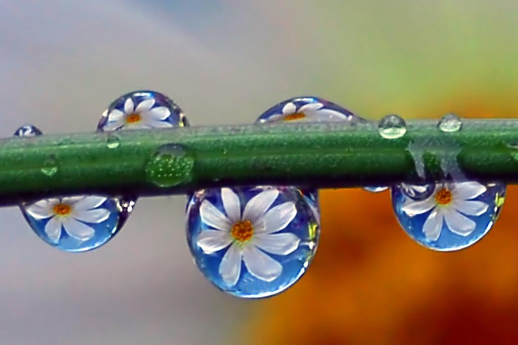 Foto de La belleza de una gota de agua (17/25)