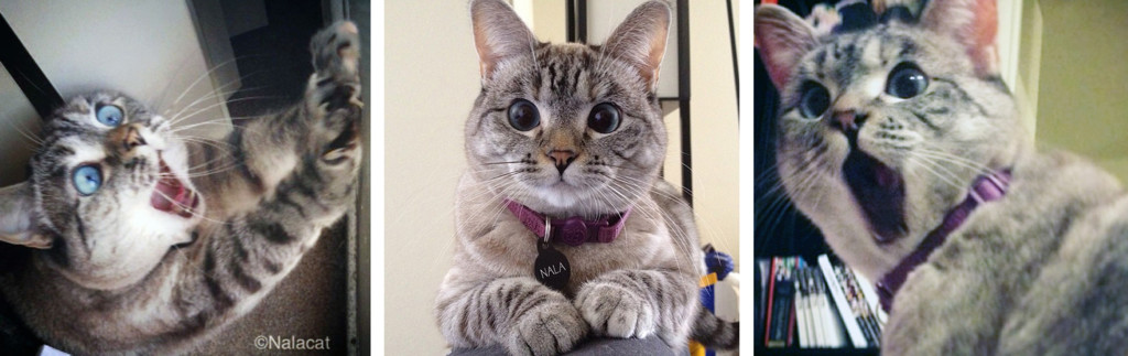 Nala Cat