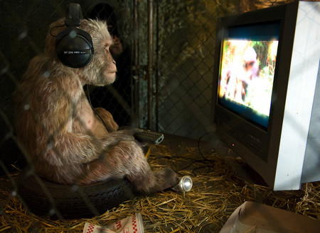 Macaco viendo la TV