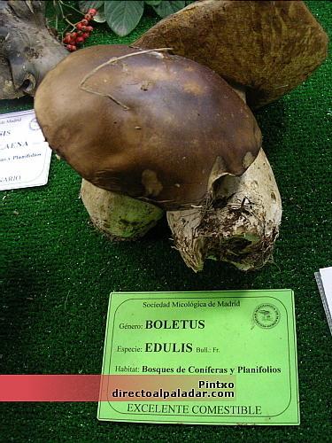 XXXVI exposición de hongos de Madrid: consejos para el consumo de setas