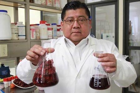 Javier Castro Rosas Estudio Flor Jamaica Elimina Bacterias