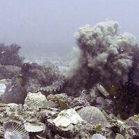 Las hembras de pulpo arrojan conchas y algas a los machos durante los intentos de apareamiento no deseados