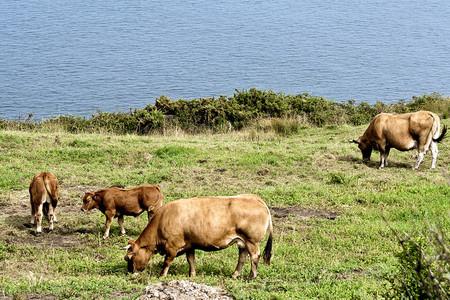 Tu empresa ¿es de carne o de leche?
