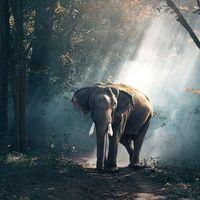 Una lista acordada de todas las especies que hay en el mundo está más cerca que nunca gracias a esta hoja de ruta
