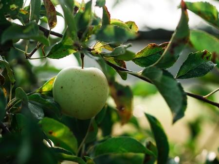 agricultura-ecologica.manzana