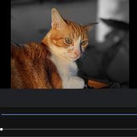 Cómo editar el enfoque y añadir el efecto Color Pop en las fotos de los Pixel y Nexus